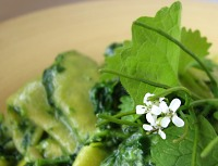Wild garlic mustard pesto with flower