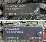 Linden tree placards